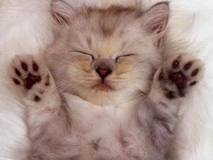 cute_kittens_20_great_pictures_1_by_skylertrinityrapture-d67m2f6[1].jpg