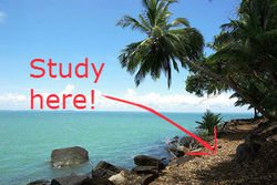 pic 1 study island.jpg